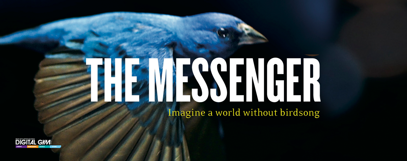 Bird Movie, The Messenger, Now Playing (April 22 – 28)